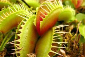 دستگاه جدیدی که می تواند با گیاهان صحبت کند